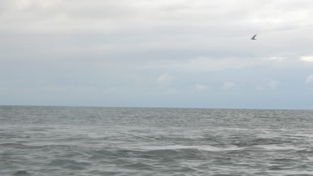 Dolphins-Swimming-in-Open-Ocean