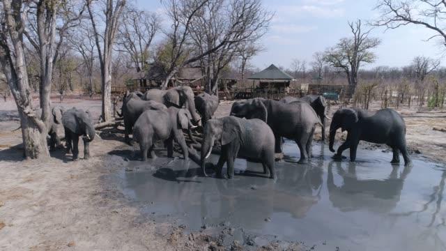 Vista-aérea-de-primer-plano-de-un-grupo-de-elefantes-bebiendo-en-Pan-de-hiena-reserva-privada-de-Khwai-Botswana