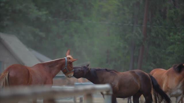 lenta-de-caballos-jugando-y-mordiendo-el-arnés-en-un-rancho-hermoso