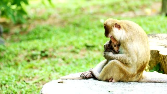 Monkey-breast-feeding-