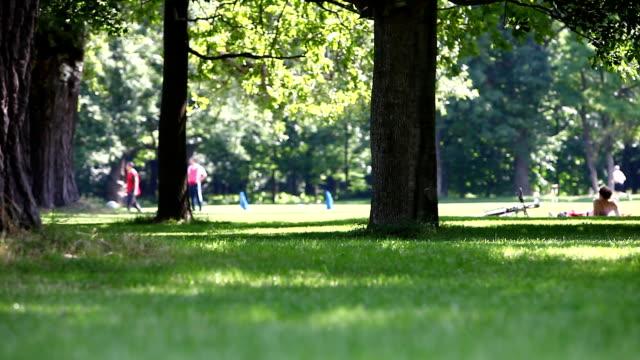 leisure-summer-activity-and-dog-in-a-park-scene