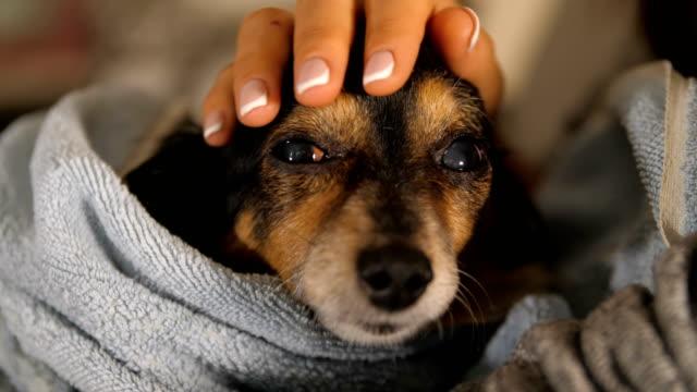 Mistress-Stroking-little-dog-after-bathing