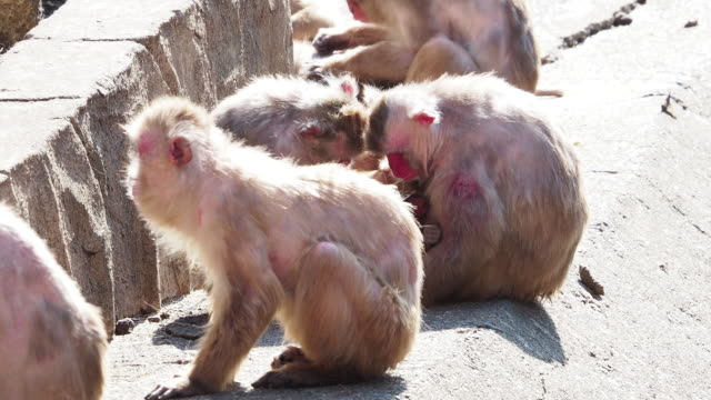 Monkeys-in-Japan-who-behave-like-human-beings