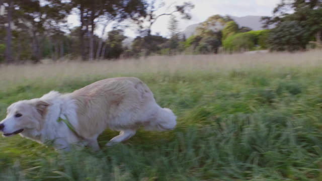 Dog-running-in-field-of-grass