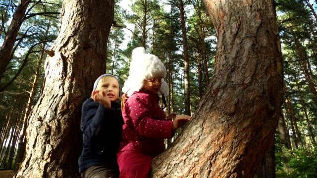 Boy-and-girl-sitting-on-a-large-tree-The-children-have-planted-on-pine-tree-and-they-are-happy-Sunday-holiday-with-children-in-the-park-