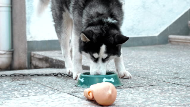 Hungry-dog-with-bowl-of-tasty-food