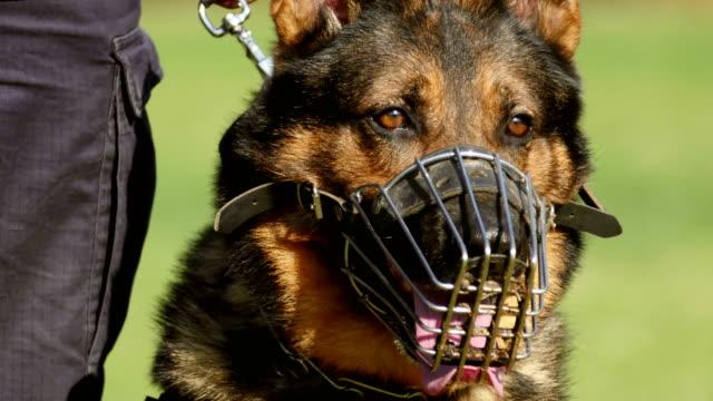 Retrato-de-perro-de-gendarmería