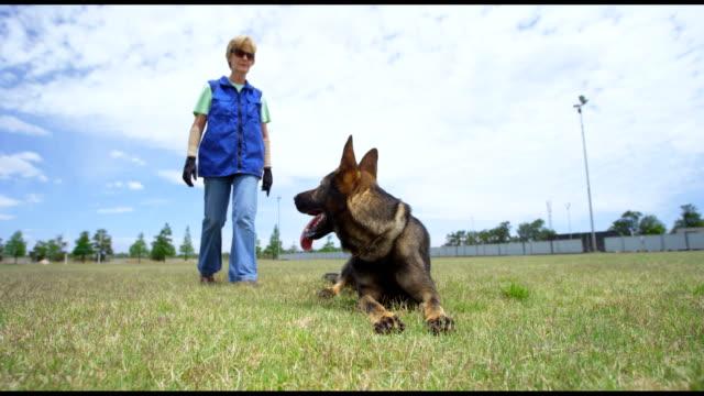 Trainer-walking-towards-shepherd-dog-in-field-4k