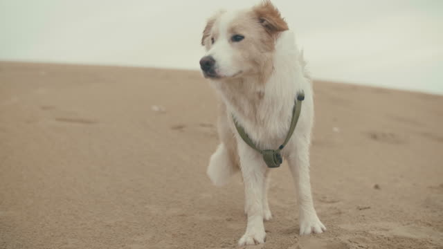 Observant-dog-watching-things-at-the-beach