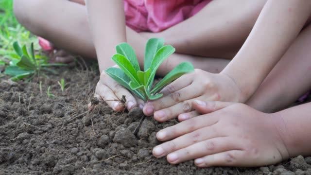 Dos-niñas-planta-un-árbol-en-la-unidad-de-tierra-Concepto-de-ecología-