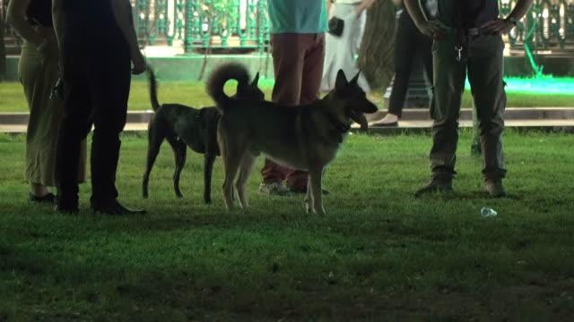 a-pie-de-las-personas-con-perros-en-la-ciudad-el-Boulevard-de-la-tarde