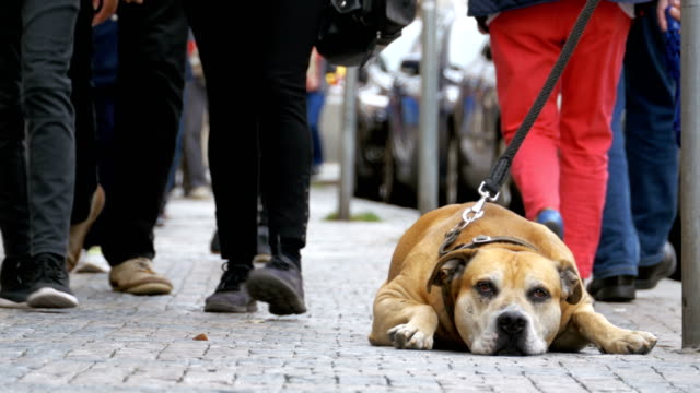 Faithful-Unfortunate-Dog-Lying-on-the-Sidewalk-and-Waiting-Owner-The-Legs-of-Crowd-Indifferent-People-Pass-by