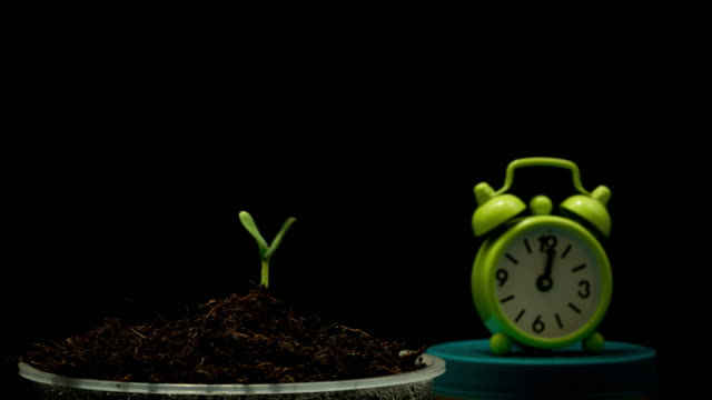 Growing-cucumber-sprout-on-black-background-time-lapse-with-clock