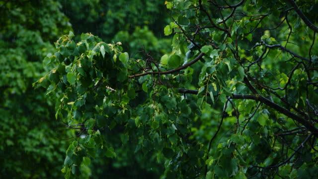 Blick-auf-die-grüne-Blätter-von-den-Bäumen-im-Regen