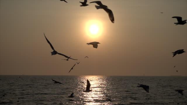 Gaviota-de-cámara-lenta-y-puesta-de-sol