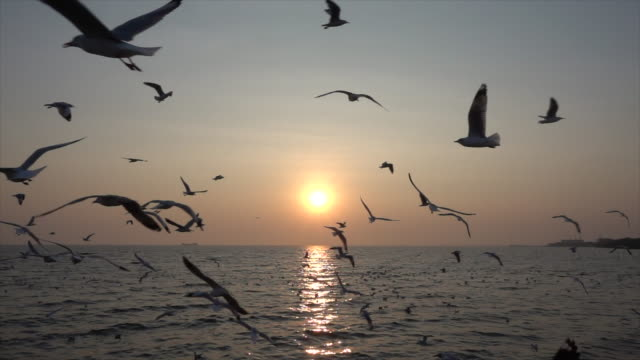 Slow-Motion-Seagull-and-sunset