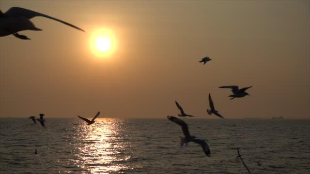 Slow-Motion-Möwe-und-Sonnenuntergang