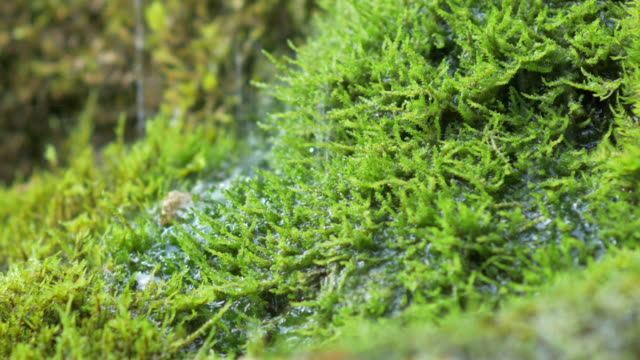 Agua-de-manantial-dribbles-on-moss