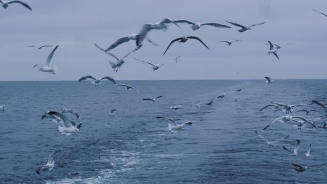 Herde-von-Möwen-fliegen-über-das-Meer-auf-der-Suche-nach-Nahrung