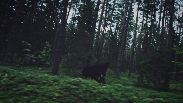 4K-Halloween-Horror-Man-Running-In-Forest-with-Black-Cape