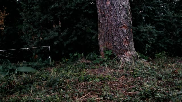 Various-pieces-of-glass-stand-in-the-forest-A-camera-moves-around-them