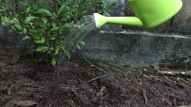 Árbol-joven-riego-con-regadera-verde-en-cámara-lenta-Concepto-de-medio-ambiente-y-ecología-