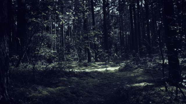 4K-Dolly-Shot-of-Halloween-Horror-Dark-Forest