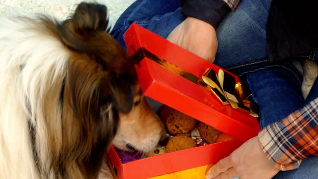 The-dog-opens-a-gift-in-which-lie-the-cookies