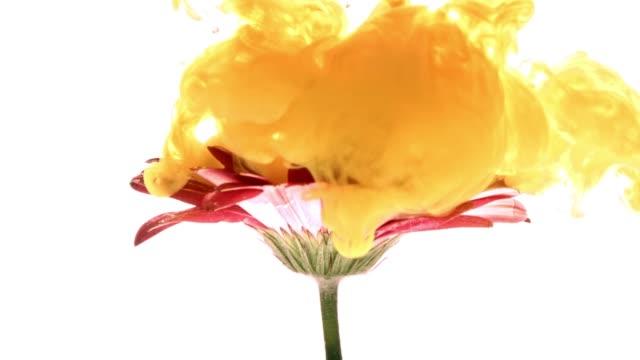 Nube-de-pintura-colorida-de-rociadura-en-hermosa-flor-sobre-fondo-blanco-