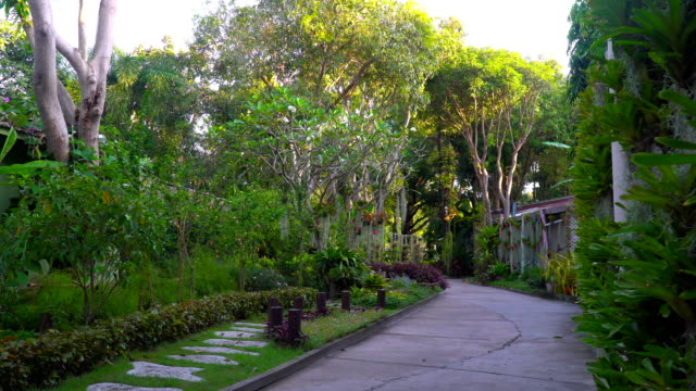 Beautiful-foliage-on-a-tropical-island-many-different-flowers-and-trees-Tropical-fairy-tale-