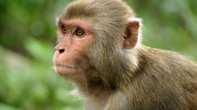 Retrato-de-un-mono-en-la-selva