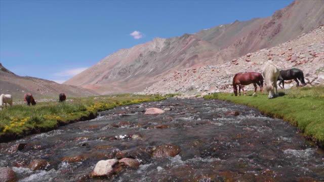 Beautiful-landscape-with-mountains-range-river-and-horses-on-the-way-to-Pangong-lake-Pangong-Tso-Ladakh-Jammu-and-Kashmir-India-