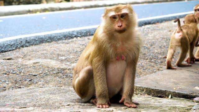 Mono-se-sienta-y-mira-fijamente-a-la-cámara-la-familia-de-los-primates