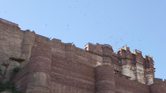 Raptors-and-birds-flying-over-Jodhpur-Fort-Rajasthan-India-