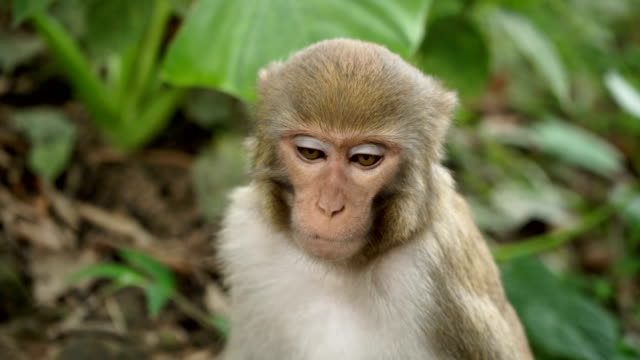 Portrait-of-a-monkey-in-the-jungle