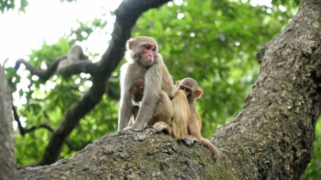Familia-de-monos-en-un-árbol