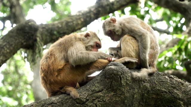 Two-monkeys-on-a-tree