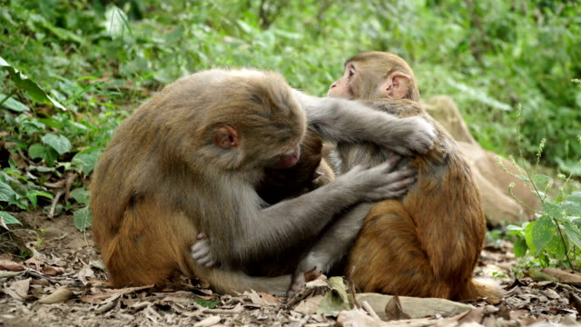 A-family-of-monkeys-in-the-wild-jungle-