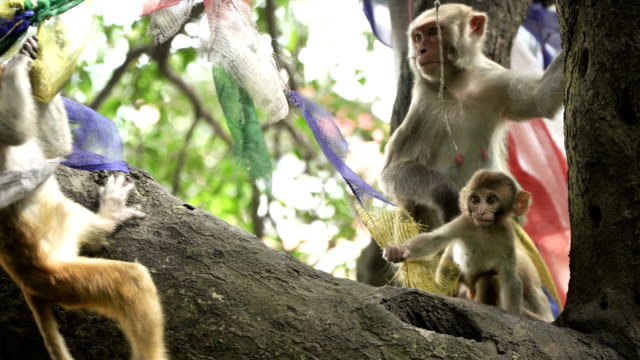 Family-of-monkeys-on-a-tree