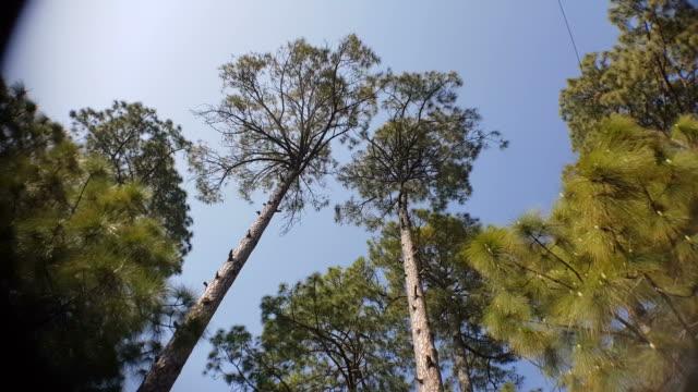 Tree-lines-near-New-Tehri-in-Uttarakhand