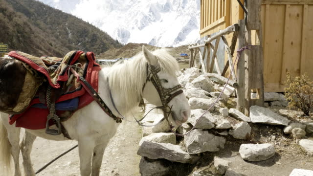 The-horse-is-tied-to-the-stall-in-village-Bimthang-Nepal-