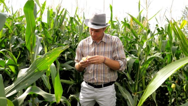 Portrait-of-Farmer-Twisting-In-The-Hand-Corn-Tries-Grains-On-Taste