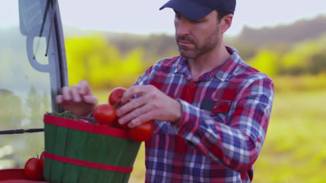 Farmer-looking-at-basket-of-tomatoes