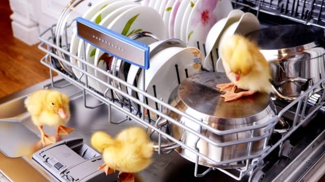 Primer-plano-dos-poco-amarillo-patitos-sentado-caminar-en-un-lavavajillas-sentado-en-las-placas-de-un-pan-en-una-cesta-En-el-fondo-una-gran-cantidad-de-blanco-limpiar-platos