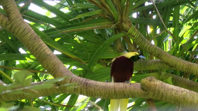 niedrigen-Winkel-Blick-auf-eine-größere-Paradiesvogel-auf-einem-Ast-in-bali