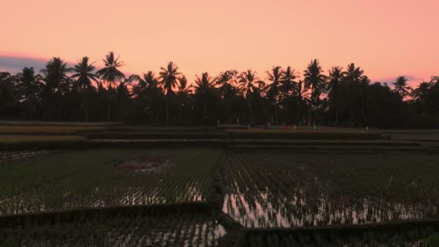 Video-aéreo-en-paisaje-con-terrazas-de-arroz-en-el-amanecer-o-atardecer-en-Bali-