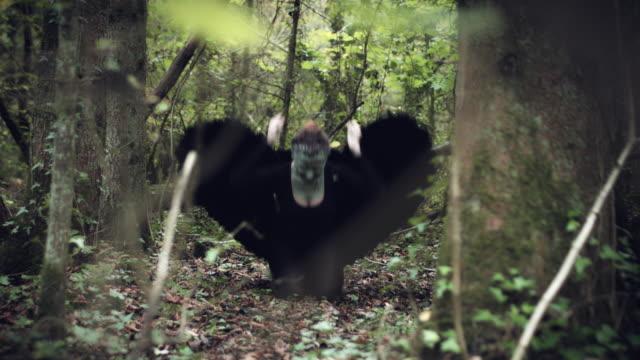 4k-Halloween-mujer-oscura-de-Angel-negro-alas-en-bosque-golpeando-el-suelo