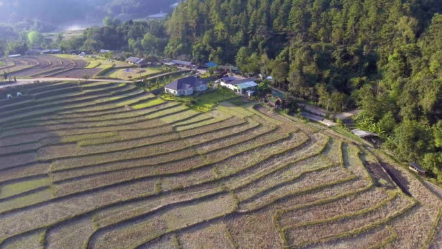 Aerial-shot-rice-field-and-mountain-view