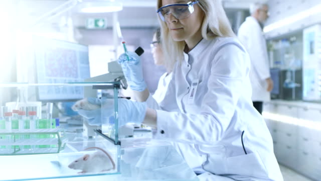 Medical-Research-Scientist-Tests-Vaccine-Experimental-Drug-on-a-Laboratory-Mouse-Injecting-it-with-Syringe-She-Works-in-a-Bright-Modern-Laboratory-