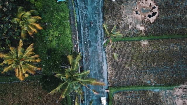 Moto-con-árboles-de-Palma-y-arroz-los-campos-circundante-4K